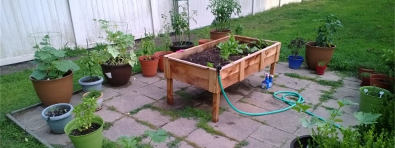 Container Garden With Elevated Bed